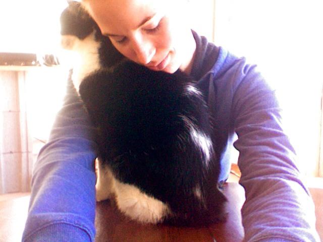 cat hug 2
