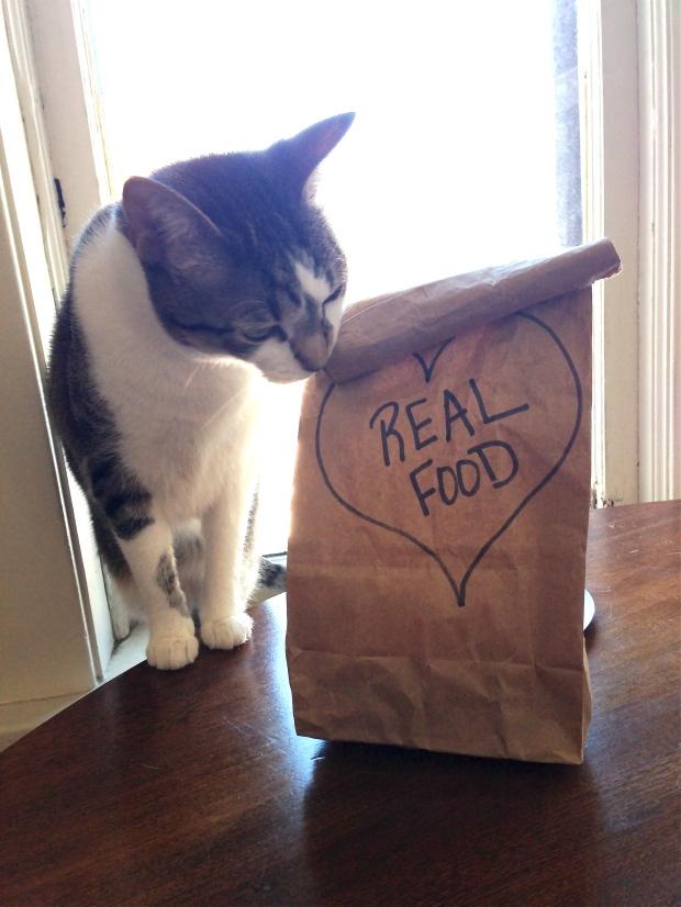 cat and brown bag