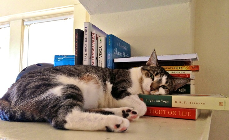 Cat with Yoga Books