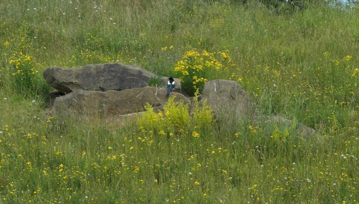 bird in meadow