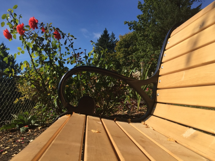bench with roses
