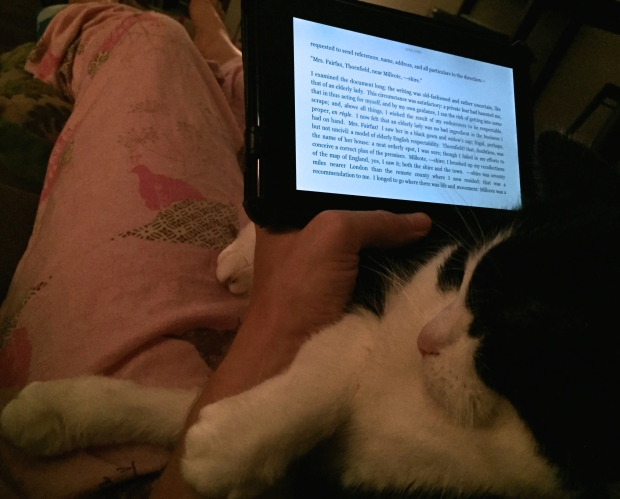 Kindle cat