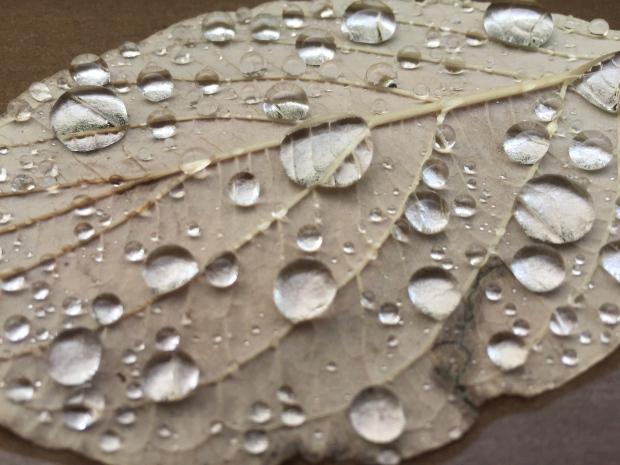 rain on leaf close-up