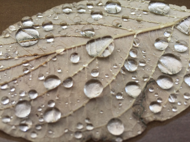 rain on leaf close-up