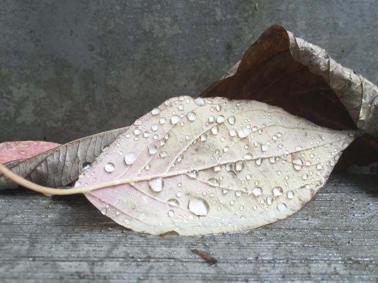 rain on leaves concrete