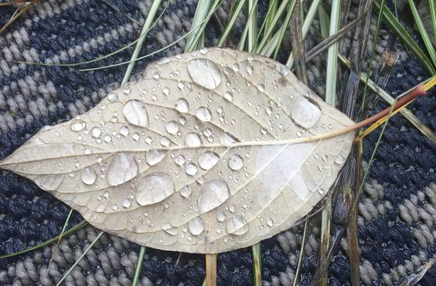 rain on leaf with grass