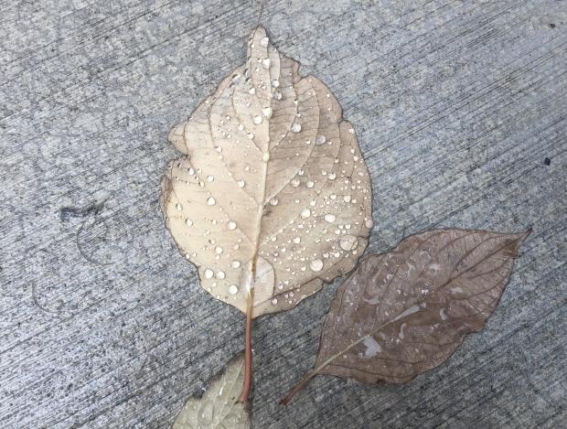rain on two leaves concrete