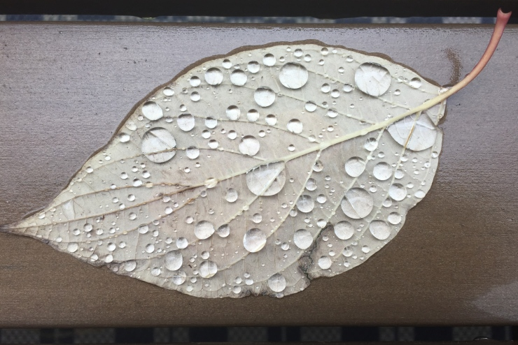 rain on leaf with bench