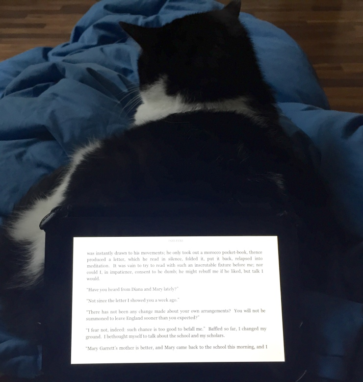 cat kindle stand