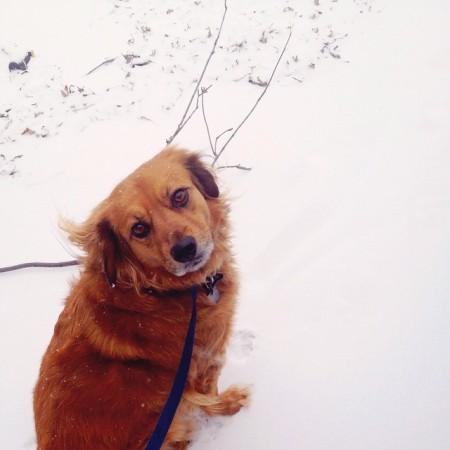 sadie_snow