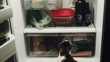 cat fridge