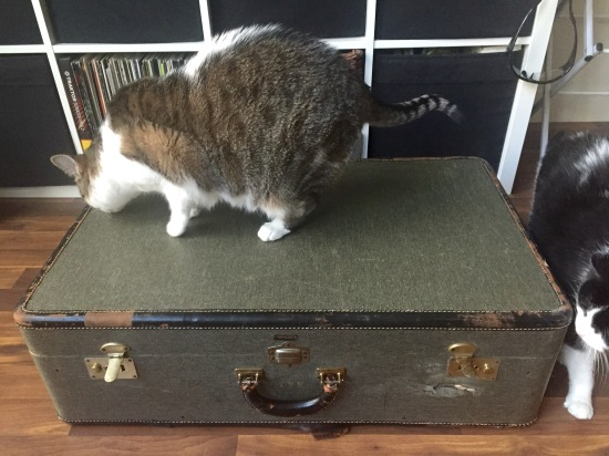 cat with vintage suitcase