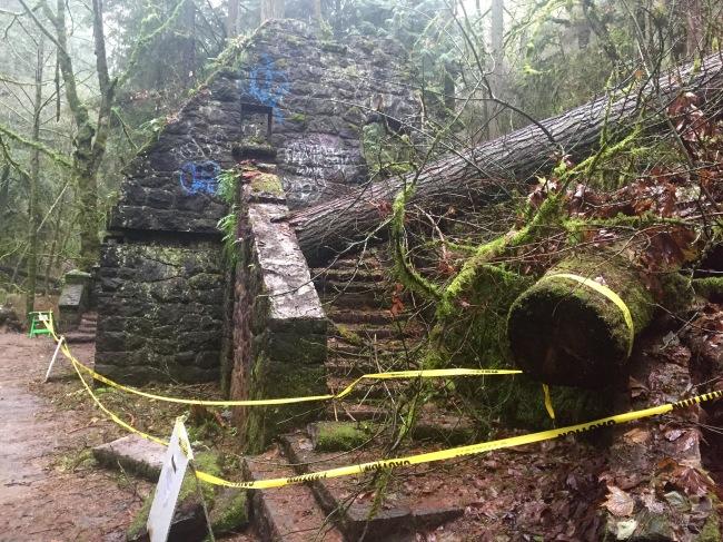 tree damage stone house