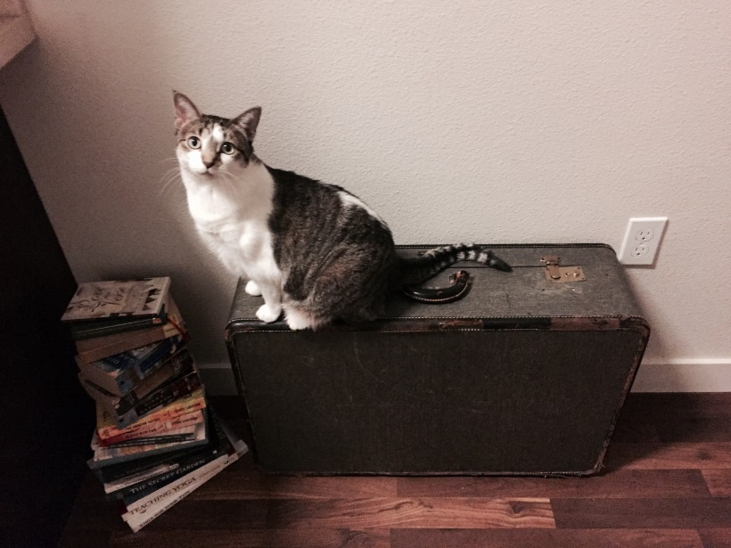 cat on vintage suitcase