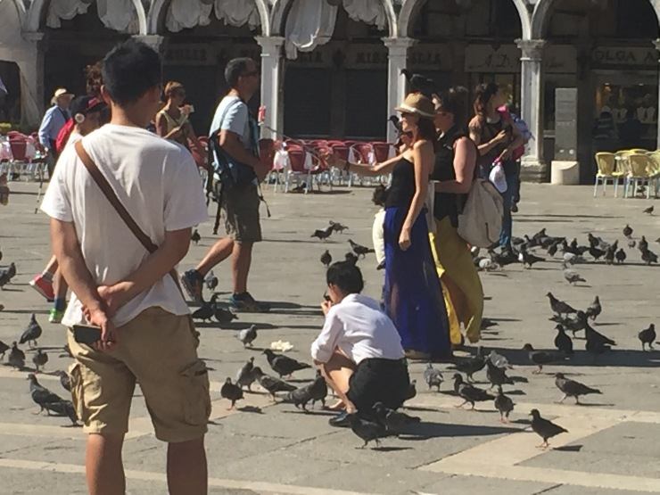 pigeons and venice