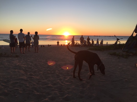 sunset-dog