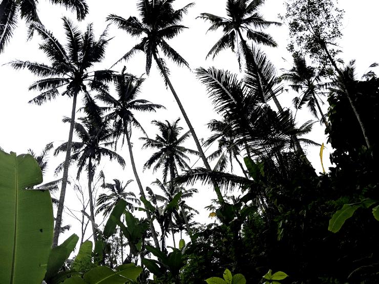 ubud jungle